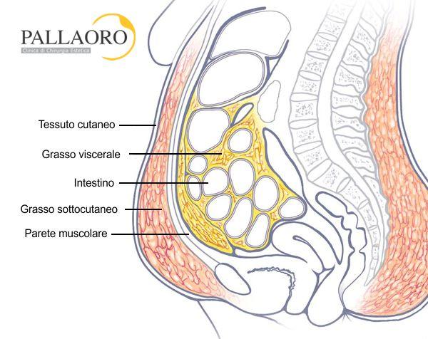 addome adiposo anatomia