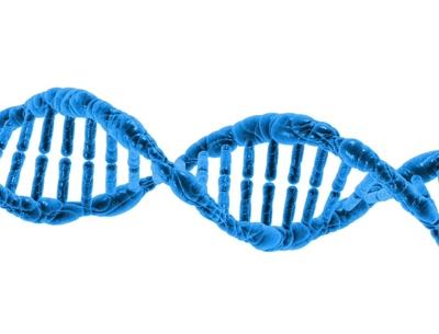 Adiposità localizzate e genetica