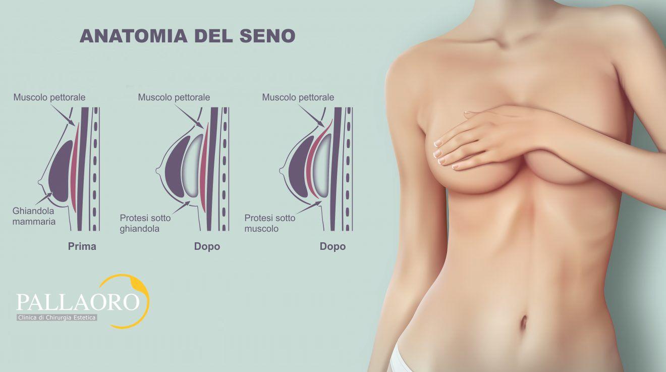 anatomia del seno mastoplastica additiva