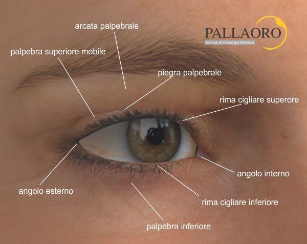 anatomia palpebrale della blefaroplastica