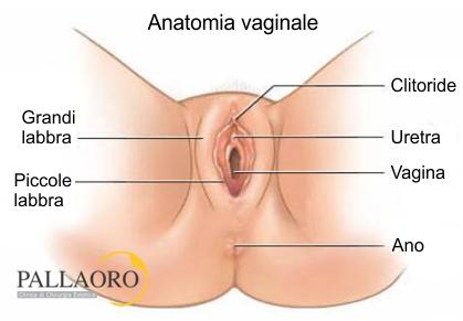 grandi e vagine
